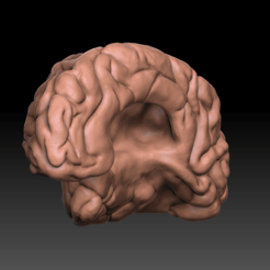 Brain side 2.png Download OBJ file Brain • 3D printing template, JGalvez