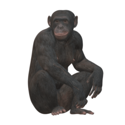ape.png Download STL file real ape • 3D printing model, walidemad