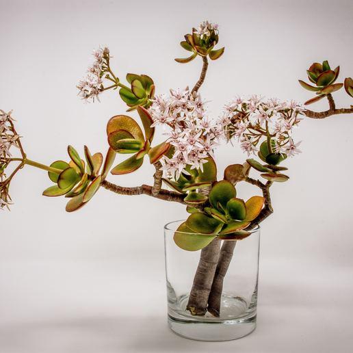 Télécharger plan imprimante 3D Vase pour plantes, wwwmuhammadameen7877