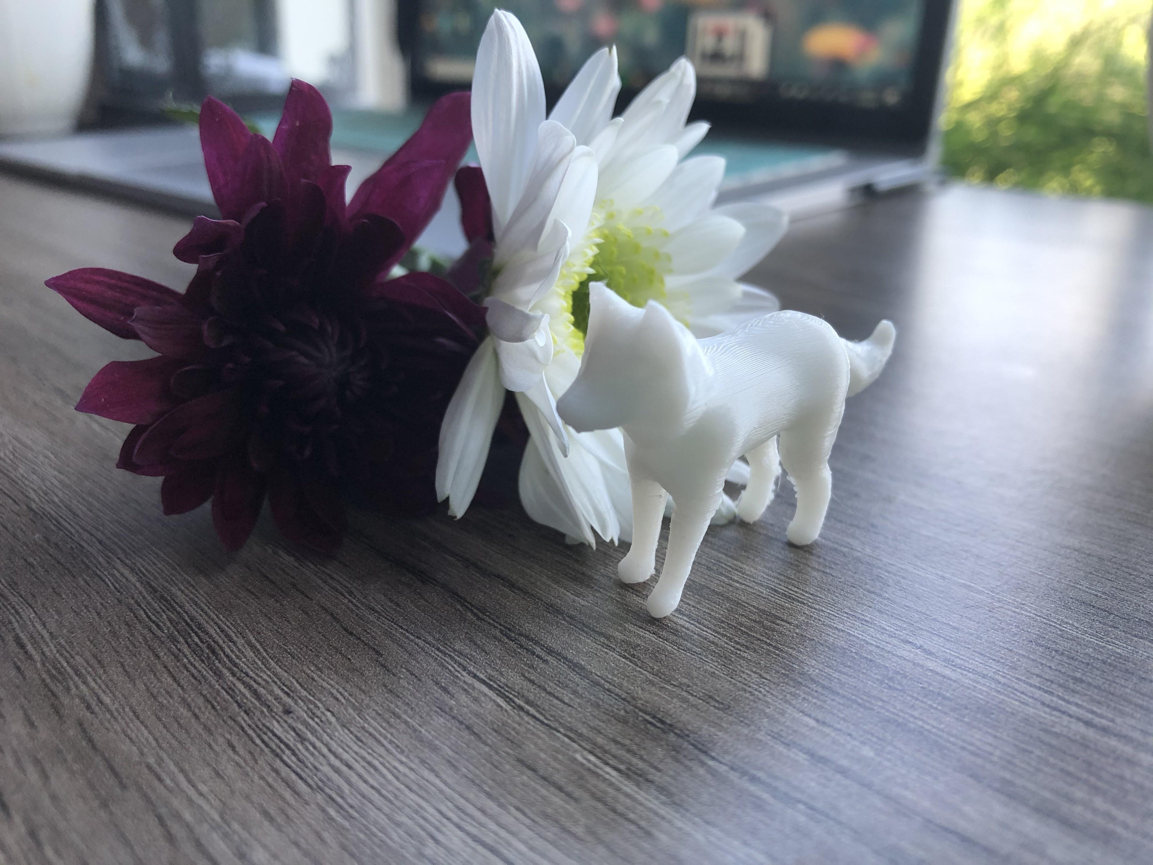 IMG_5872.jpg Download free STL file Tiny Wolf • 3D print model, skelei