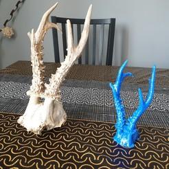 Télécharger modèle 3D chevreuil crâne chevreuil, 300javi
