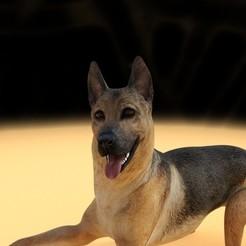 Télécharger fichier STL gratuit L'animal de compagnie du berger allemand Lovers Free STL • Objet à imprimer en 3D, samlyn696