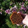 Impresiones 3D gratis Hotel de abejas, Baeocystin