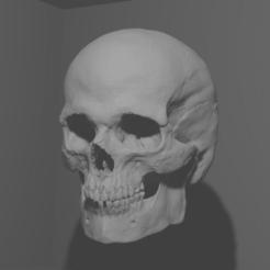 superwoowweee.png Download STL file Realistic Skull • 3D printable model, chazz1981