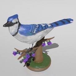 Main_Cover.jpg Download STL file Blue Jay • 3D printer object, Murmyav