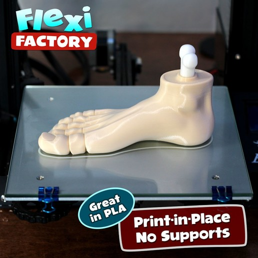 Foot_2.jpg Download STL file Flexi Print-in-Place Foot • 3D printer template, FlexiFactory