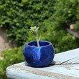 Tinypot2.jpg Download free STL file Tiny Pot for plants • 3D printable design, jcasalins