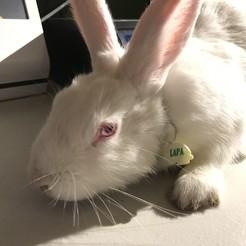 Download 3D print files Rabbit tag, baja3dprint