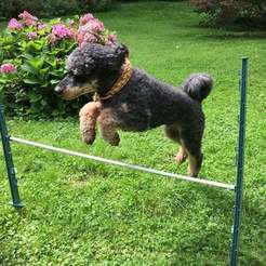 Photo-2017-08-17-13-29-00_5540.jpg Download free STL file Quick Made Obstacles For Dog Agility • 3D printing template, willie42