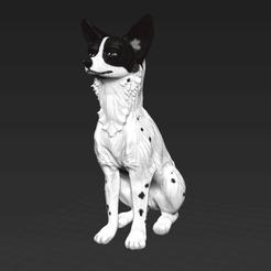 1.png Télécharger fichier STL Chien Basenji assis Modèle canin africain • Plan pour impression 3D, FellowFenne