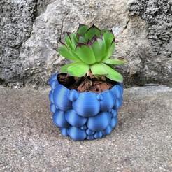 Télécharger fichier imprimante 3D pot à bulles de cactus, hruska