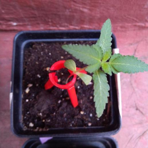photo_2020-06-03_20-00-11.jpg Télécharger fichier 3DS gratuit Soutien aux plantes • Objet pour impression 3D, Mawcoo