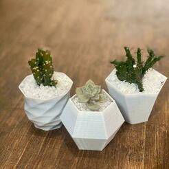 WhatsApp Image 2020-07-13 at 13.44.22.jpeg Download 3MF file planter succulents / pot for succulents • 3D print design, JGSerey
