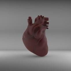 Télécharger fichier STL gratuit Coeur humain • Modèle pour impression 3D, lucasadrianpulido