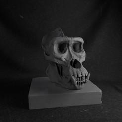 Descargar archivo 3D gratis Gorilla Skull, marcomondragon_art