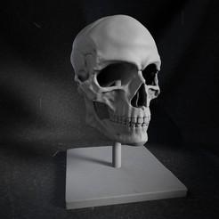 Descargar diseños 3D Skull Ornament, marcomondragon_art