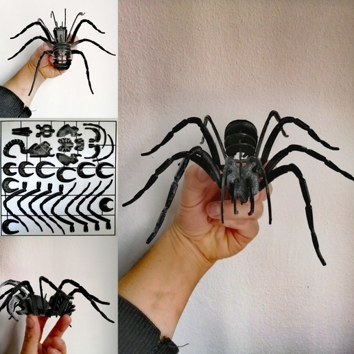 Download 3D model Spider to assemble, marioorojas