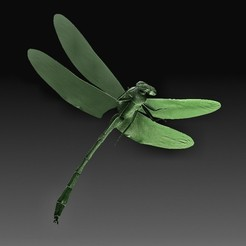 Dragonfly.jpg Télécharger fichier OBJ Libellule • Plan imprimable en 3D, tex123