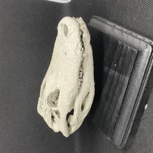 Download free STL file Crocodile Skull • 3D printer template, aporcelli26