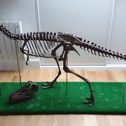 Download OBJ file Life size baby T-rex skeleton - Part 01/10 • 3D printer template, godetseb