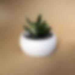 Télécharger STL gratuit Cactus Planter 2 - petit, Prigle