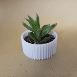 Download free 3D printing files Cactus Planter 3 - small, Prigle