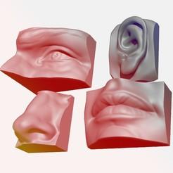 Flyer.jpg Download OBJ file ANATOMY PACK - FACE PARTS • 3D printing model, aleplanascadogan