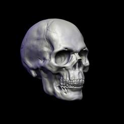 untitled.167ed.jpg Télécharger fichier OBJ Tête de mort • Design pour imprimante 3D, conti3d