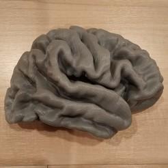 Brain_CP_RH_1.jpg Télécharger fichier STL gratuit Modèle du cerveau humain • Modèle imprimable en 3D, i3dbrain