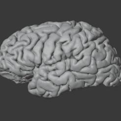 brain_normal_lh1.png Download STL file NORMAL HUMAN BRAIN MODEL • 3D printable model, i3dbrain