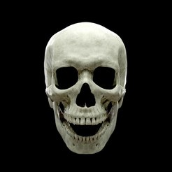 thomas-skull-face2_low.jpg Download OBJ file Realistic Human Skull Anatomy stl and OBJ • 3D printing model, Tomsculpt