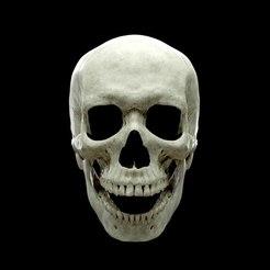 thomas-skull-face2_low.jpg Télécharger fichier OBJ Realistic Human Skull Anatomy stl and OBJ • Objet imprimable en 3D, Tomsculpt