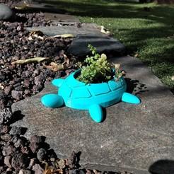 Télécharger fichier STL Pot de tortue minimaliste • Plan à imprimer en 3D, aleglez19912