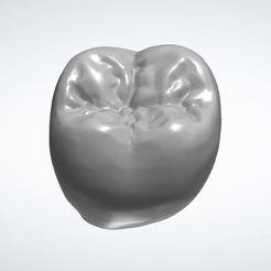 dent 47.JPG Download STL file TOOTH MORPHOLOGY 47 • 3D printable template, aknotdesign