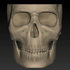 Screenshot_1.png Download STL file Skull vase • 3D printer design, wendelgoes