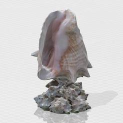 1.JPG Télécharger fichier STL Figurine en forme d'hélice de coquillage • Modèle pour impression 3D, Turbo3D