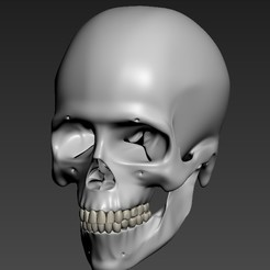 craneo.jpg Télécharger fichier STL Crâne humain • Objet à imprimer en 3D, PrintLand
