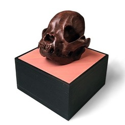 three quarter on lt side500px.jpg Download STL file The Frenchie Skull  |  Foundation Series • 3D print template, PoloniusStudios