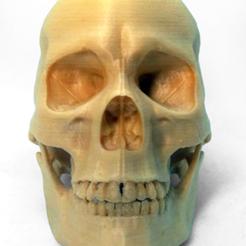 wood_skull_5_good_file.png Télécharger fichier STL gratuit CRÂNE MASCULIN ANATOMIQUE DE L'HOMME EN PLAINE DE BOIS • Modèle pour imprimante 3D, PoloniusStudios
