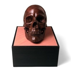 front500px.jpg Download free STL file Anatomical Human Male Skull • Model to 3D print, PoloniusStudios