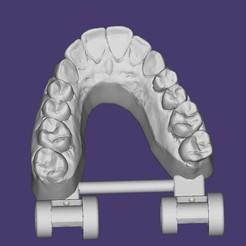 bandicam 2020-10-07 15-43-46-732.jpg Download STL file UPPER ARTICULATED DENTAL MODEL • Object to 3D print, URZO