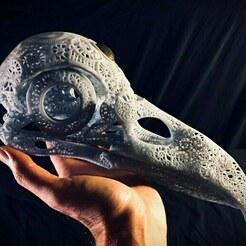 preview5.jpg Télécharger fichier STL Crâne de corbeau anatomique en filigrane • Objet à imprimer en 3D, Droppingformdesigns
