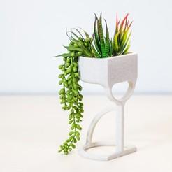 _MG_2263.jpg Download STL file MarioAmmuro |  pot for succulents • 3D printer object, Tulofai
