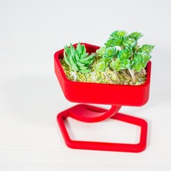 _MG_2287.jpg Download STL file ilBaretto  | cup or pot for succulents • 3D printable object, Tulofai