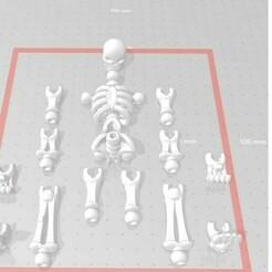 Photo squelete.jpg Télécharger fichier STL gratuit Squelette Articuler  • Design à imprimer en 3D, Kurome