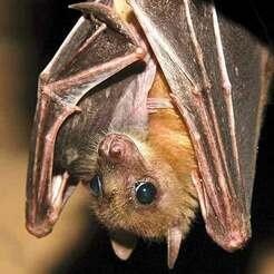 external-content.duckduckgo.com.jpg Download free STL file Night bats heads and extras • 3D printing design, Pyrowalker
