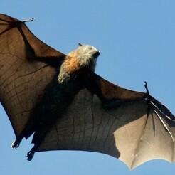 external-content.duckduckgo.com.jpg Download free STL file Night bats torsos • 3D printable object, Pyrowalker