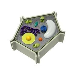 zw.jpg Télécharger fichier STL gratuit noyau de la cellule • Plan pour impression 3D, CrealityCloud