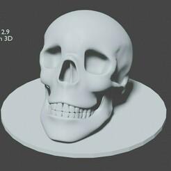 craneo_humano_perfil.jpg Download STL file Human skull • 3D printing template, historias3D