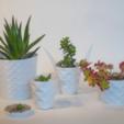 Free STL file Parametric Flower Pots, cirion